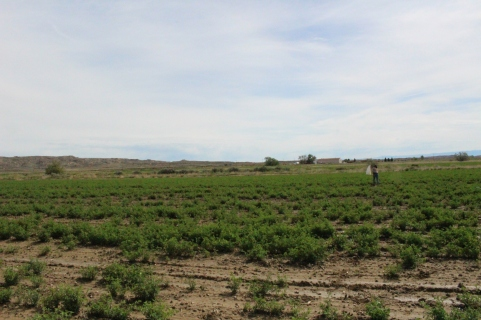 field6